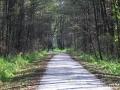 Cesta ki se drži svoje smeri-FOTO  Slavko kohek