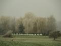 Ko listje zaćne zimsko se belit-FOTO slavko kohek