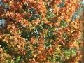 Ko narava spremei barvo-FOTO slavko kohek