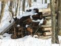 Kopada snežinka FOTO slavko kohek